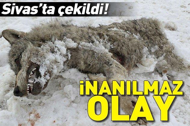 Sivas'ta çekildi! İnanılmaz görüntü