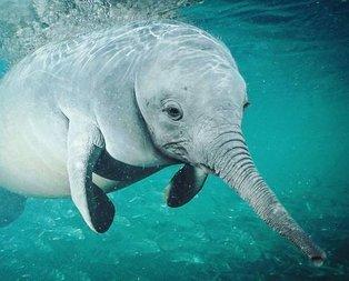 Balina fil karışımı deniz canlısının görüntüsü ortalığı karıştırdı