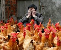 Avrupa ülkesinde koronadan sonra kuş gribi alarmı