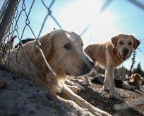 Hayvan hakları yasası artık yürürlükte