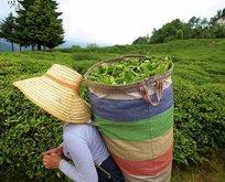 E-Devlet seyahat izin belgesi nasıl alınır? Çay hasadı seyahat izin belgesi başvurusu nasıl yapılır?
