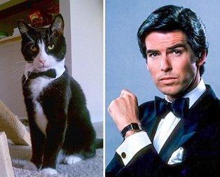 Kediler ve film karakterleri arasındaki benzerlik