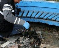 Antalya'da 'Pes' dedirten olay! Kediyi yakarak öldürdüler