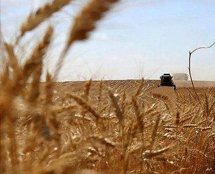 Türkiye'nin 2020 buğday hedefi 20,5 milyon ton! Türkiye dünyada ilk sırada...