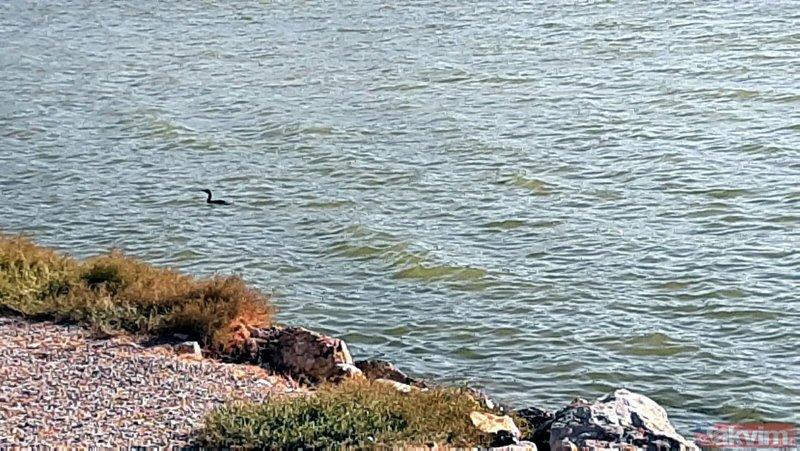İzmir'de şaşkına çeviren olay! Helikopterler denizden su taşırken almış...
