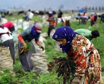 Mevsimlik işçilerin şartları düzelecek
