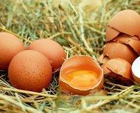 Yumurta masum