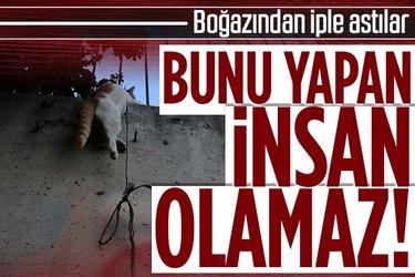 Sultangazi'de vahşet! Kediyi boğazından iple asarak öldürdüler
