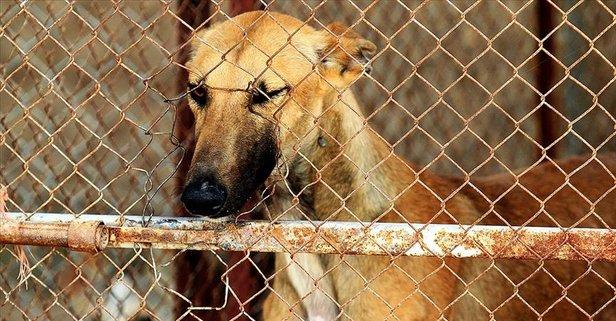 Yulin festivali nedir? Yulin festivalinde köpek mi yeniyor?