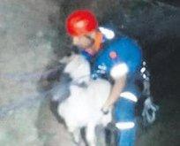 Koyun kurtuldu çoban boğuldu
