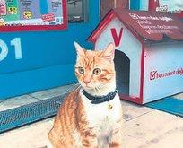 Marketçi kedi dünya basınında