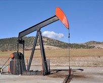 Petrol sondaj kuleleri arttı