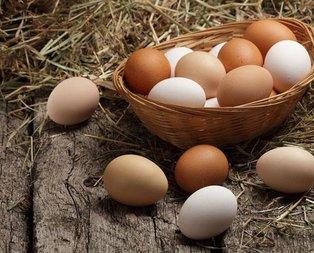 Hamileler yumurta yesin