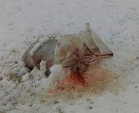 Mezarlığın önüne domuz parçaları bıraktılar!