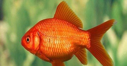 Rüyada balık yemek neye işarettir?