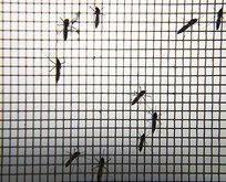 İstanbulluların sinek çilesi! Şikayetler arttı