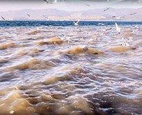 CHPli belediye denize lağım boşaltıyor