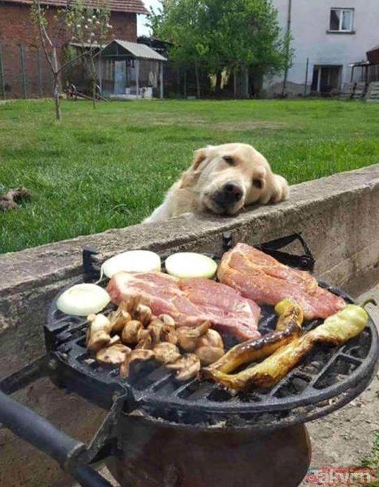 Köpeklerin yemeklerle olan imtihanları