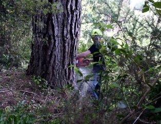 Kocaman ağaçtan bakın ne yaptı! Görünce çok şaşıracaksınız