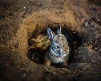 Görenler şoke oldu! Tavşan deliğinden...