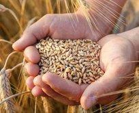 Buğday ithalatına sıfır gümrük vergisi