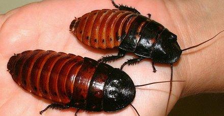 Rüyada hamam böceği görmek ne anlama gelir?