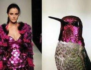Modanın kuşlara göre uyarlanışı