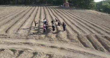 Bir kilosu 40 bin lira olan safranın hasadı başladı