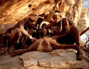 Babun kellesi yiyerek hayatta kalan avcı-toplayıcı kabile: Hadza