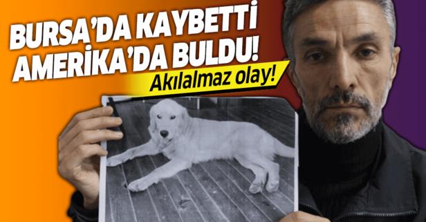 Kaybolan köpeğini Amerika'da buldu