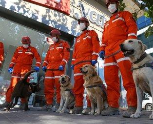 Jandarma Arama Kurtarma ekibindeki köpekler, hassas burunlarıyla enkaz altındakileri hayata bağlıyorlar
