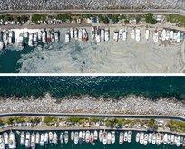 İstanbul'da müsilajın öncesi ve sonrası