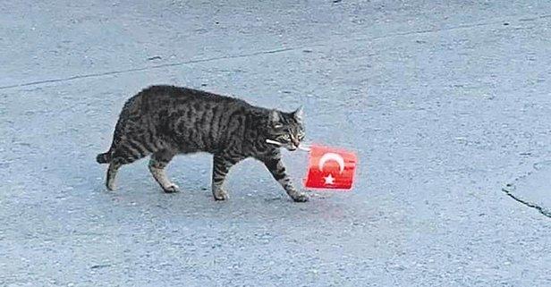 Güzel hare'cat'