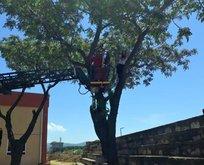 Kediyi kurtardı kendisi ağaçta kaldı