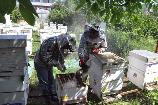 Kadın girişimci arı sütü siparişlerine yetişemiyor