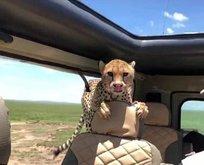Tropikal cennet Kenya'dan ilginç bilgiler