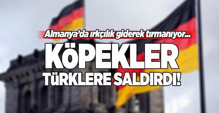 Almanya'da Türklere köpekli saldırı