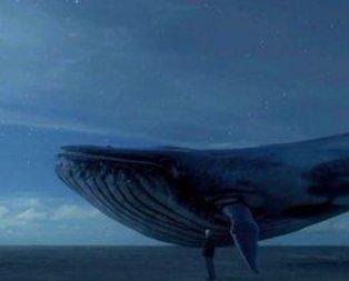 150 intiharda mavi balina izi