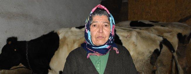 Dolandırılan şehit ailesine inekleri teslim edildi