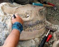 O ilimizde bulundu! Tam 8,5 milyon yıllık...