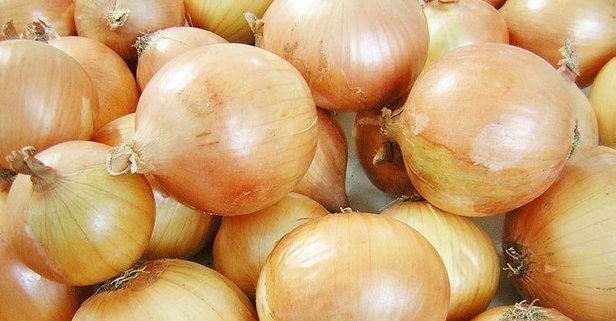 Kuru soğan tarlada 80 kuruş