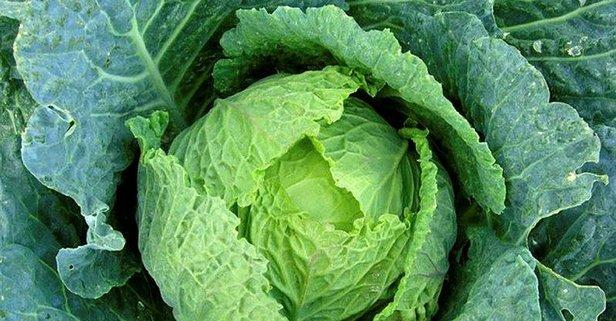 Katarakta lahana