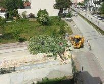 CHP'li belediye Gezi'nin yıl dönümünde ağaç kesti!