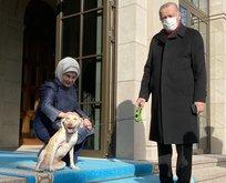 Emine Erdoğan'ın paylaştığı fotoğraflara beğeni yağdı
