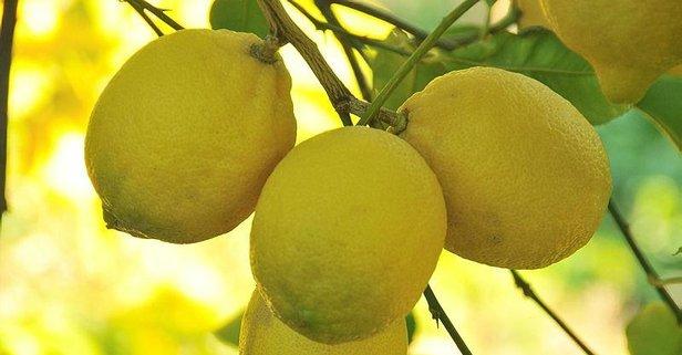 Diş ağrısına limon suyu