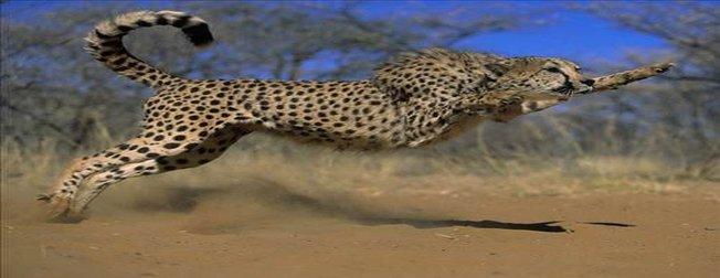 En hızlı hayvanlar