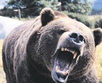 Ceviz toplarken ayı saldırdı