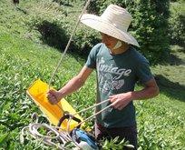 Rizeli gencin çay toplamada kıvrak zekası