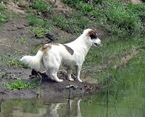 Sokak köpeğinden vefa örneği