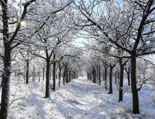 Ankara'da kar yağışı etkili oluyor! Ankara'da okullar  tatil mi? 14 Aralık Cuma Ankara'da okullar tatil olacak mı?